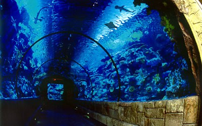 Welcome to the deep blue world of Shark Reef. Here you will come face-to-face with some of the earth's most fascinating creatures in North America's only predator-based aquarium and exhibit. […]
