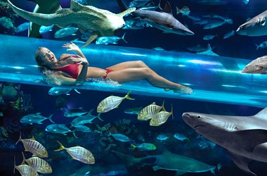 The expanded resort is built around two aquariums. The largest faces the swimming pool, and incorporates a slide through the tank containing full grown sharks. The smaller aquarium is in […]